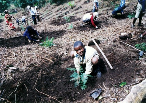 キリマンジャロ山で取り組まれている植林作業